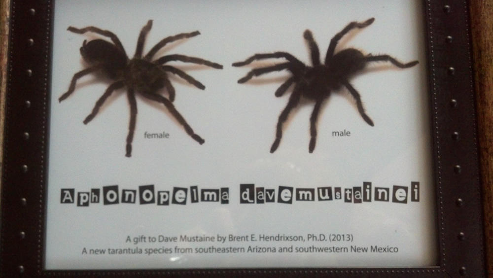 dave mustaine tarantula